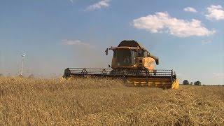 TraktorTV Folge 51 -  Ein New Holland CX 8090 im Winterroggen