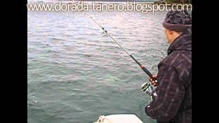 pescadoradatanero 5ª y 6ª pesca dorada  peche dorade  fishing orata