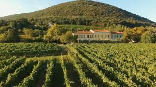 Castel san mauro è un luogo baciato dal sole, tra il bosco del sabotino e l'isonzo ha microclima unico ed terreno adatto. la viticoltura qui, come in t...