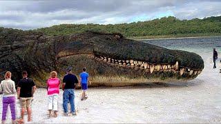 أكبر تمساح في العالم تم العثور عليه في الفلبين بعد أن أكل العديد من الناس , لن تصدق حجمه المرعب