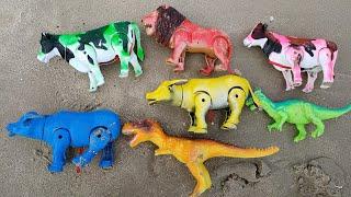 เรียนรู้สีต่างๆกับวัว ควาย ช้าง ม้า สิงโต ริมทะเล lion cow buffalo elephant horse dinosaur