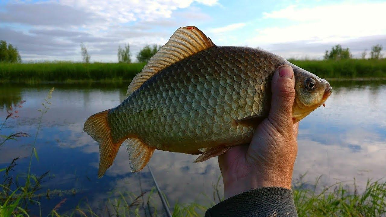 თევზაობა ტივტივაზე შემოდგომით 2019 Осенняя рыбалка на карася 2019