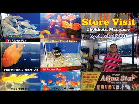 Aquarium Fish Shop Tour Aqua Star Mangalore