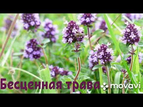 Эта трава уничтожает вирус гриппа, стрептококк, герпес, кандиду и ещё более 50 заболеваний!