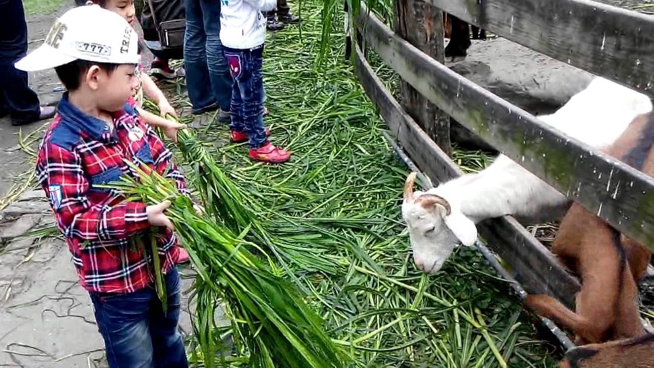 宜農牧場 - 餵羊吃草1 - YouTube