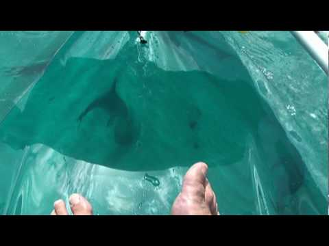 Dolphins Feet Clear Kayaking Youtube