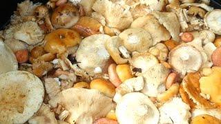 Вымачивание и соление пластинчатых грибов