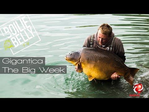Carp Fishing Gigantica, the week of BIG carp!