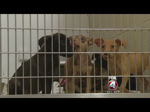 Southwest Florida shelters pull off large scale pet rescue for Louisana