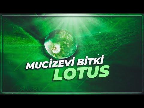 Hiçbir Şeyin Kirletemediği Mucizevi Bitki | Lotus