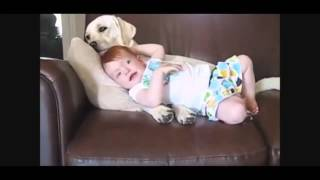 Дети и собаки! Очень смешное видео! | Funny dogs and children