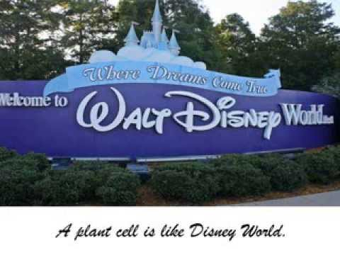 Disney World Cell Analogy Project - YouTube