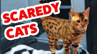 Download Funniest Scaredy Cat Home Videos of 2016 Weekly Compilation | Funny Pet Videos Mp3 and Videos