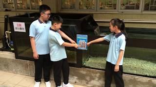 Publication Date: 2018-05-06 | Video Title: 梁校生態教育徑 第二站馬蹄蟹