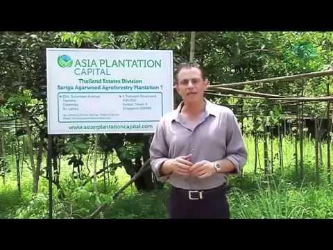 Agarwood - Asia Plantation Capital
