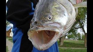 Вот это Рыбалка!!! Забагрил Монстра. Ловим Судака на Спиннинг