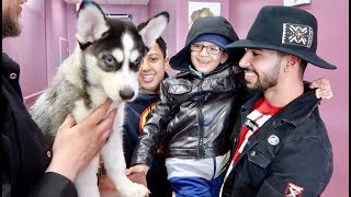 SURPRISING MY FAMILY WITH A BABY HUSKY!!