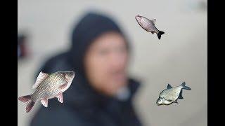Осенняя рыбалка на реке дон - тестирование прикормки