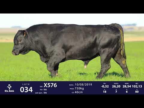 LOTE 34 - TAT X576