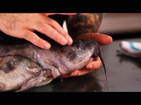 Video Buy catfish fillets online