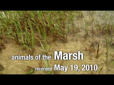 Animals of the Marsh: In the Grass