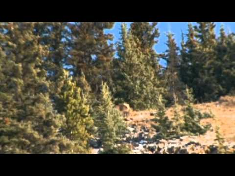 Canada In The Rough: Trophy Elk Hunting In Alberta Canada With Lost Guide Outfitters