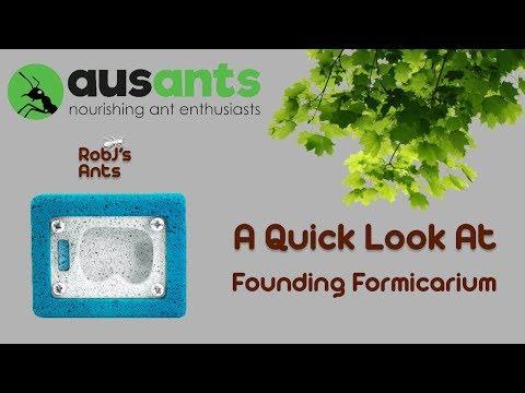 Ants Australia | Ytong Nest Size 01 / Founding Formicarium