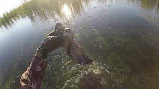 Early Teal Season 4 For 4 - 2019 STA
