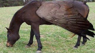 10 Raas Exticas De Cavalos nicas No Mundo