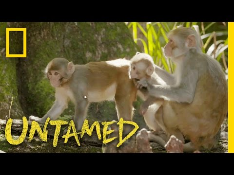 Monkeys vs. the Gator Gauntlet: Ep. 1 | Untamed with Filipe DeAndrade