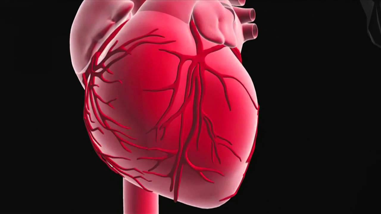Rolle und Funktion des Herzens - YouTube