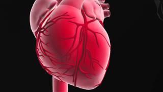 Rolle und Funktion des Herzens