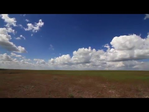 Travel  around Kazakhstan. Steppe. Spring. Fields of poppy.