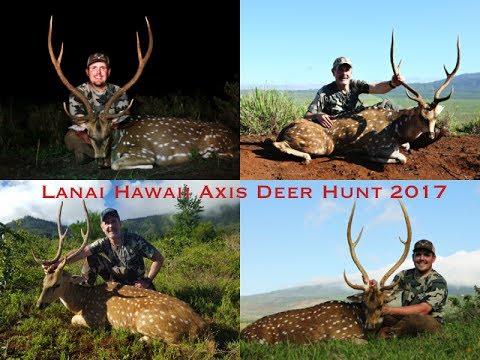 Lanai Hawaii Axis Deer 2017