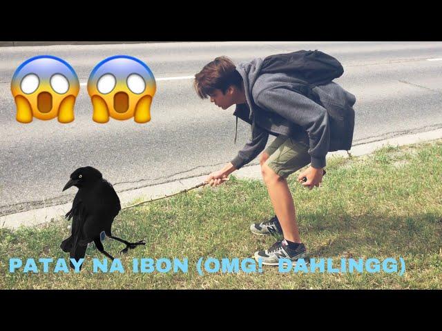 NILARO ANG PATAY NA IBON! LIKE EW DAHLING! JM Vlog #3