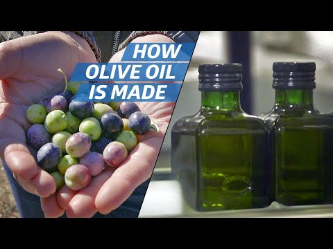 How Olive Oil Is Farmed And Processed At The Country's Biggest Producer — How To Make It