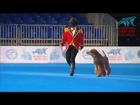 FCI Dog dance World Championship 2016 –Heelwork to music final - Chiara Meccoli and Thunder (Italy)