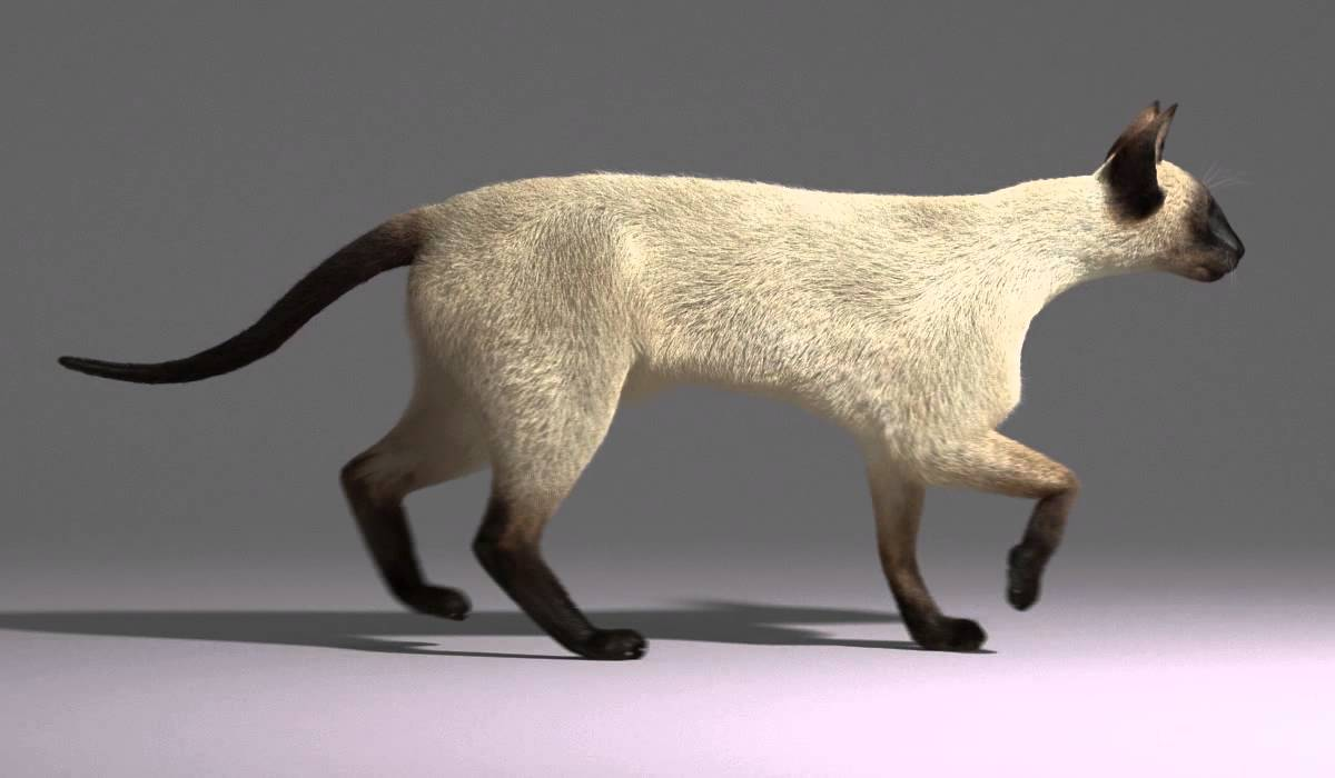 Cat Walking Flash Animation