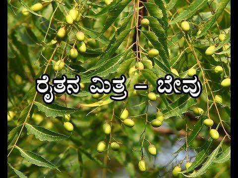 Neem farmers' friend - ರೈತನ ಮಿತ್ರ ಬೇವು