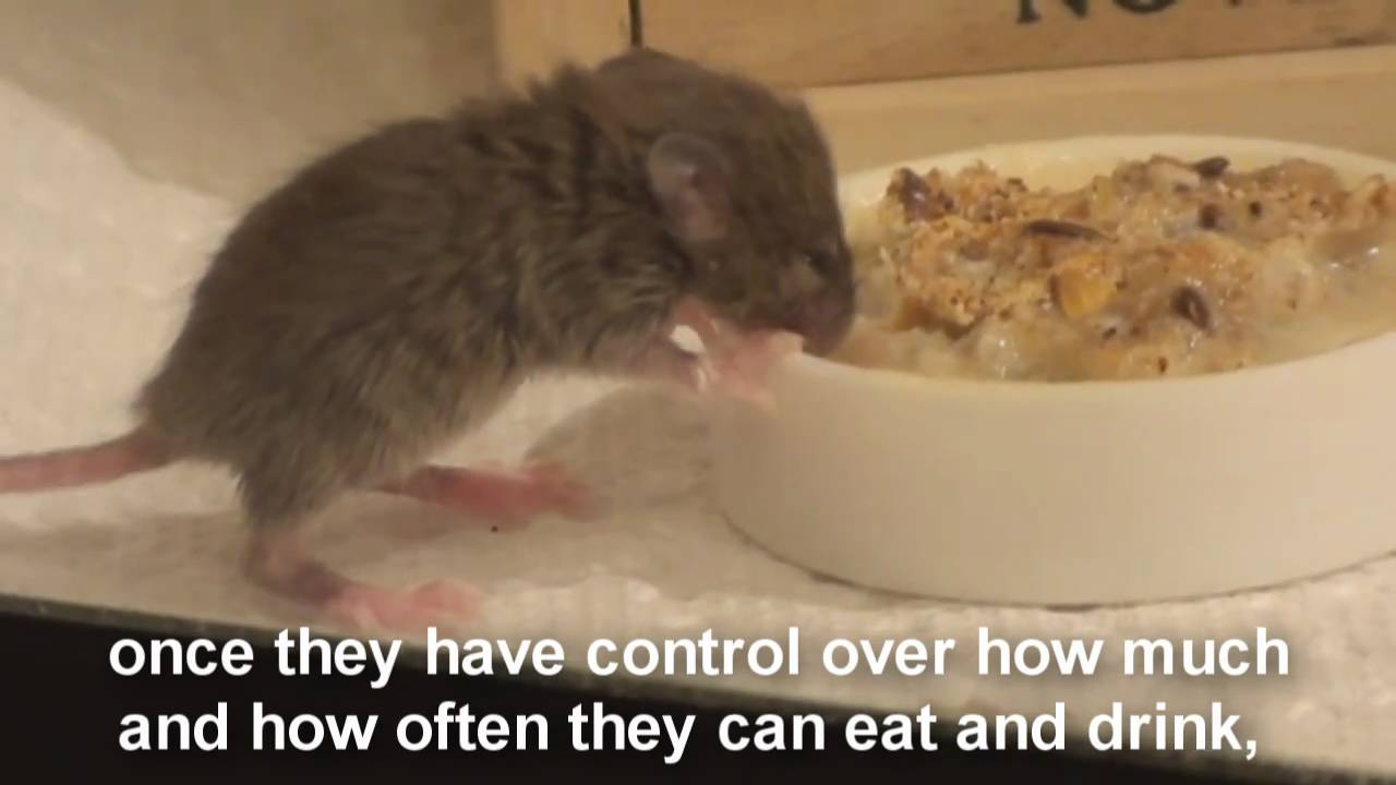 Raising A Baby Mouse 6 10 Dehydration Bloat Youtube