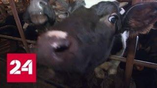 Подмосковную ферму превратили в концлагерь для животных - Россия 24