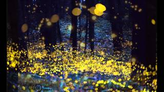 Blackfield-Firefly