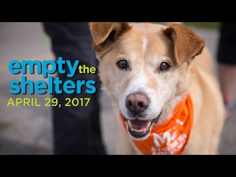 Empty The Shelters-Michigan