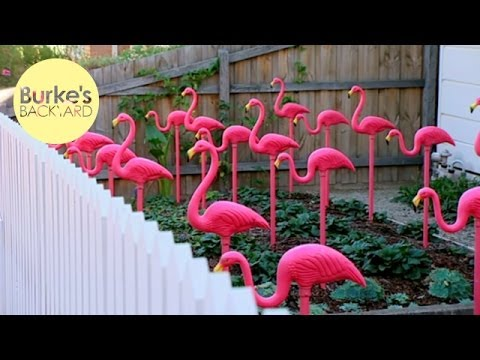 Burke's Backyard, Pink Flamingo Garden