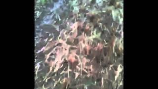 Gundog Training English Springer Spaniel - Max