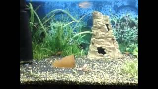 Лекция  Признаки минерального голодания аквариумных растений. Часть № 1