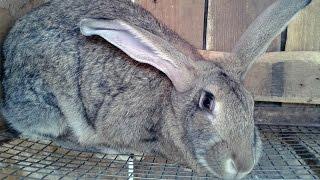 Biggest Rabbit Farm