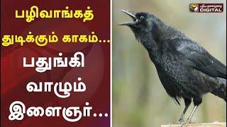 பழிவாங்கத் துடிக்கும்   காகம்... பதுங்கி வாழும் இளைஞர்...