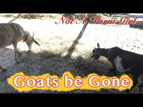 Goats be Gone - Barter is Better