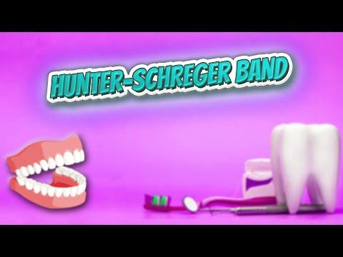 Hunter Schreger Band - Everything Dentistry 🍎👄🔊✅